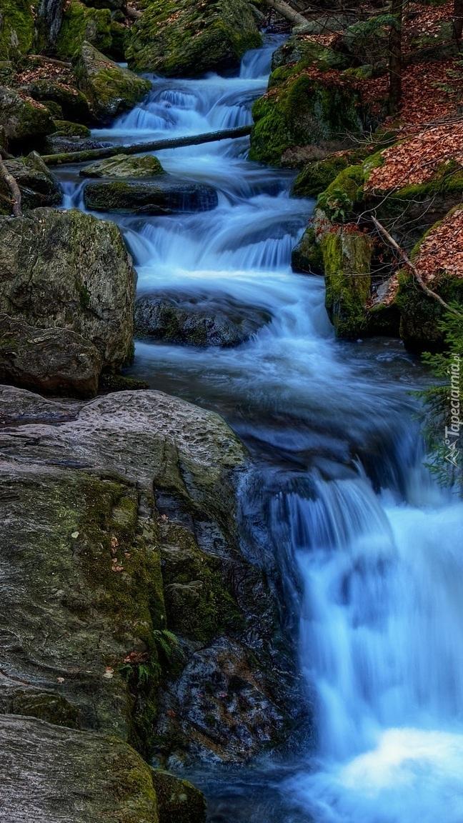 Rwąca rzeka na skałach w lesie
