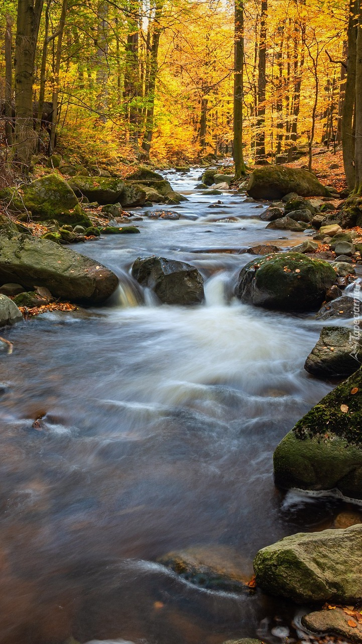 Rwąca rzeka w jesiennym lesie