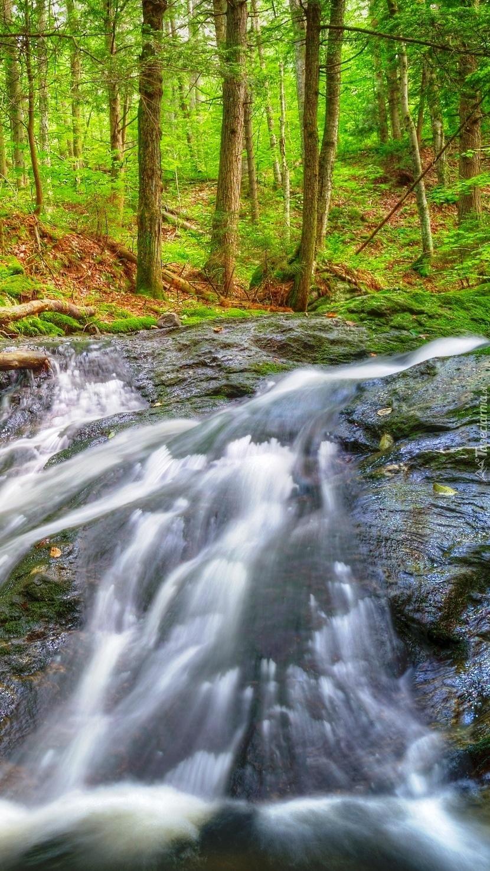 Rwąca rzeka w lesie