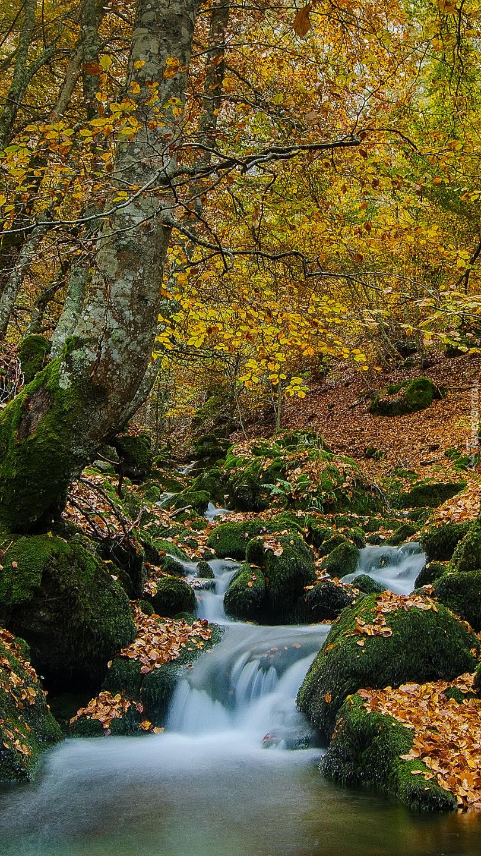 Rwący leśny strumyk