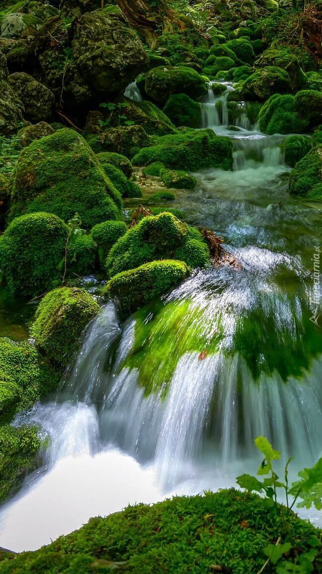 Rwący strumień na omszałych kamieniach