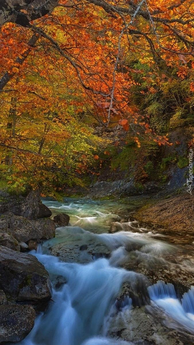 Rwący strumień w jesiennym lesie