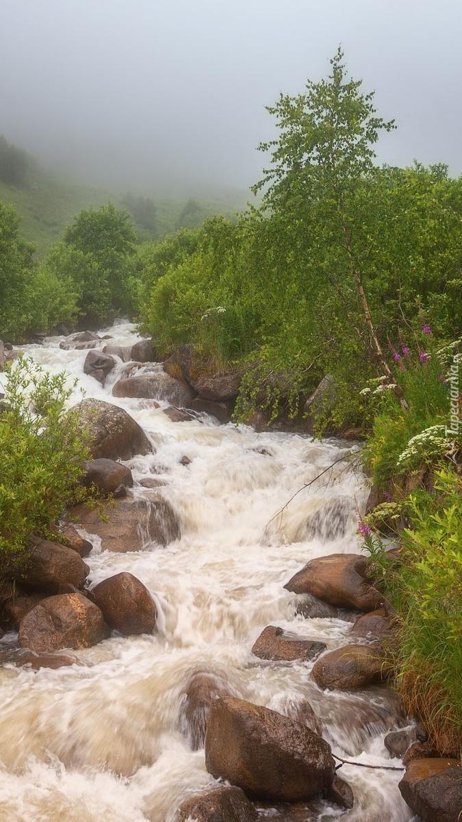 Rwący strumień
