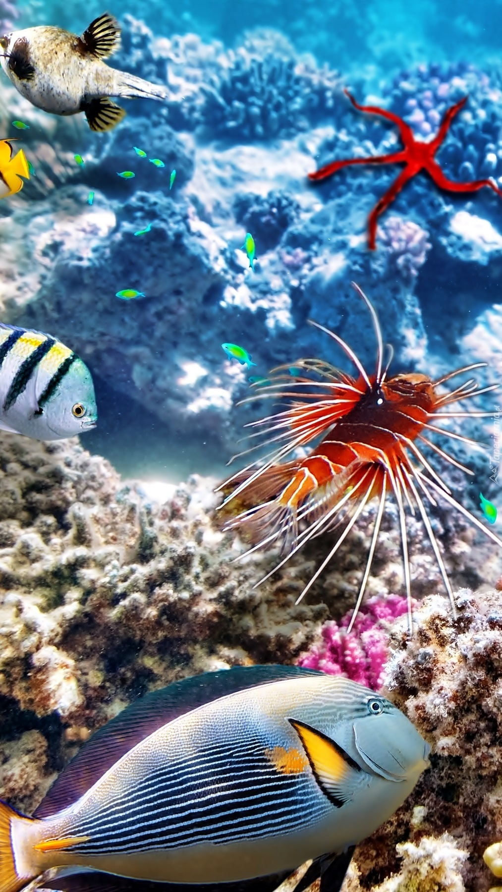 Ryby obok rafy koralowej