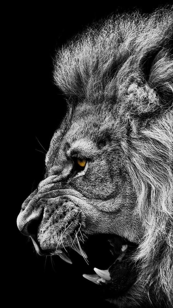 Ryczący lew
