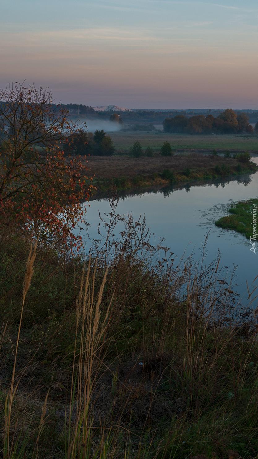 Rzeka i łąka o świcie