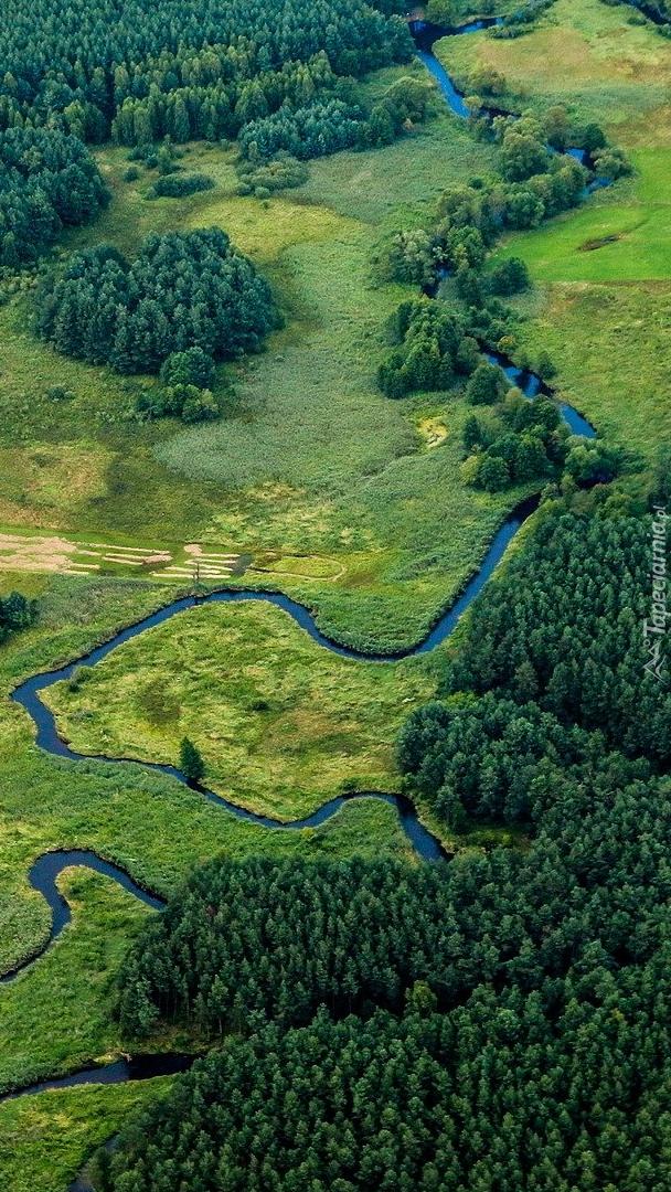 Rzeka i lasy z lotu ptaka