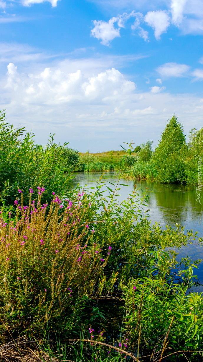 Rzeka latem