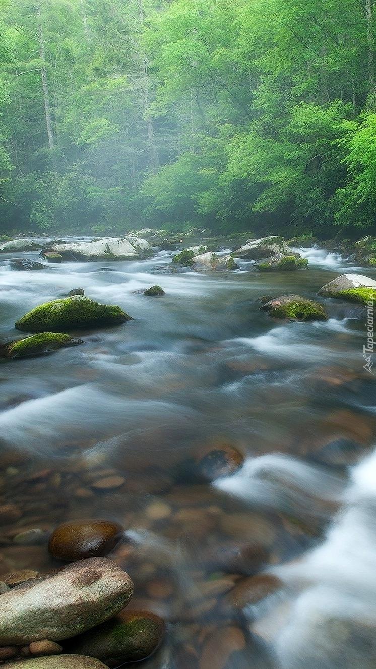 Rzeka Little River