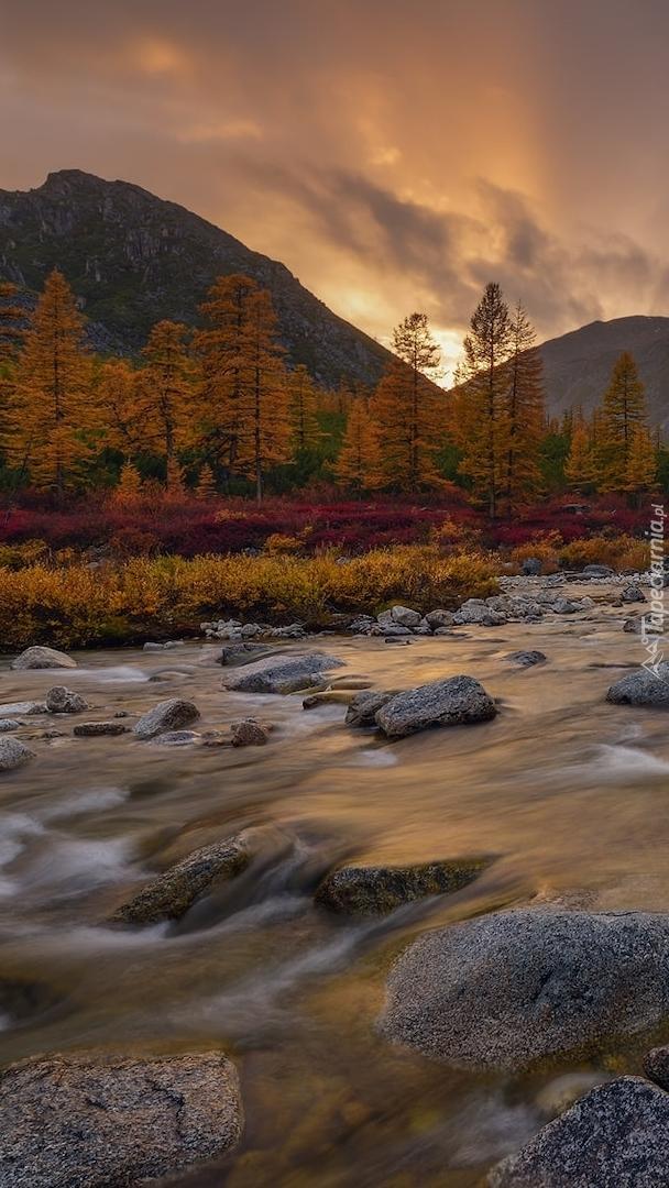 Rzeka Purga w Rosji