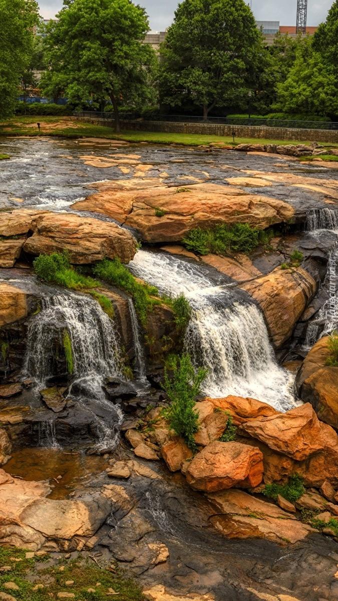 Rzeka Reedy