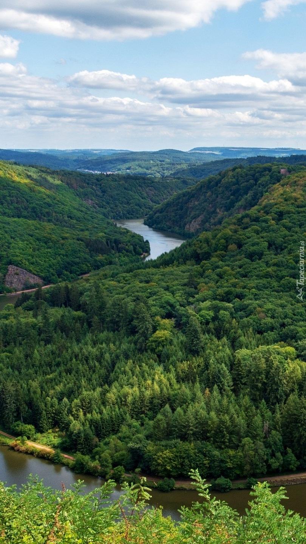 Rzeka Saara pośród drzew