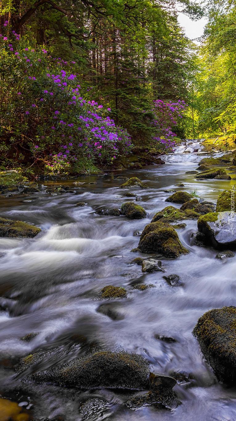 Rzeka Shimna w lesie