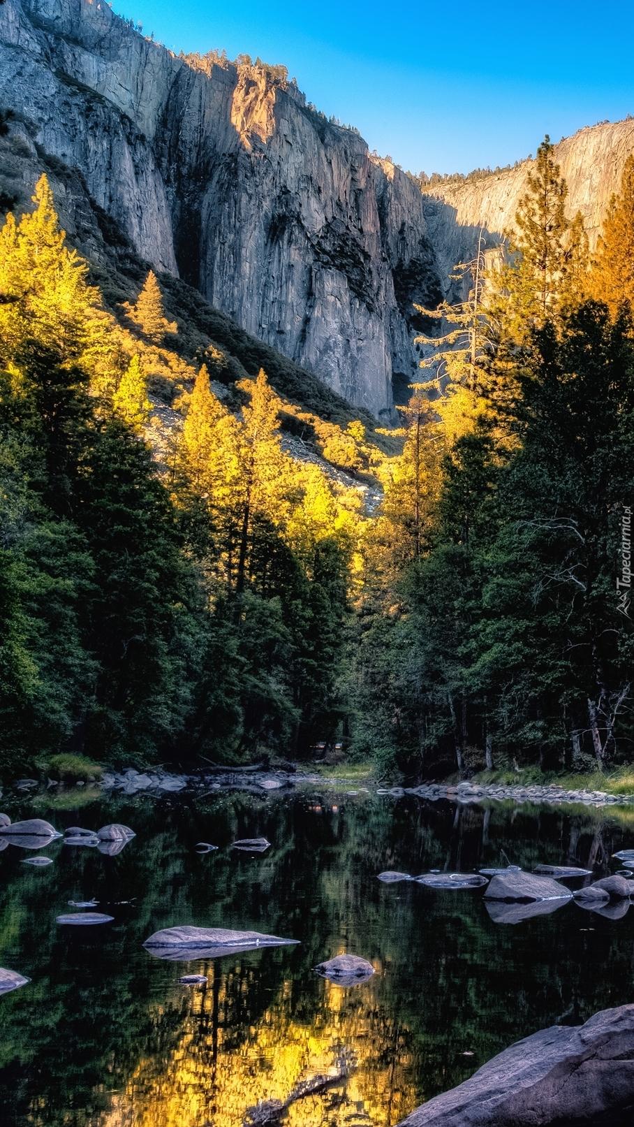 Rzeka w górach otoczona lasem