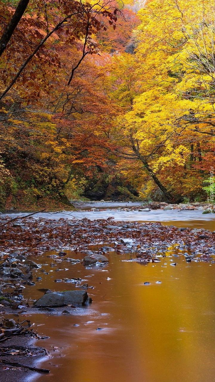 Rzeka w jesiennym lesie