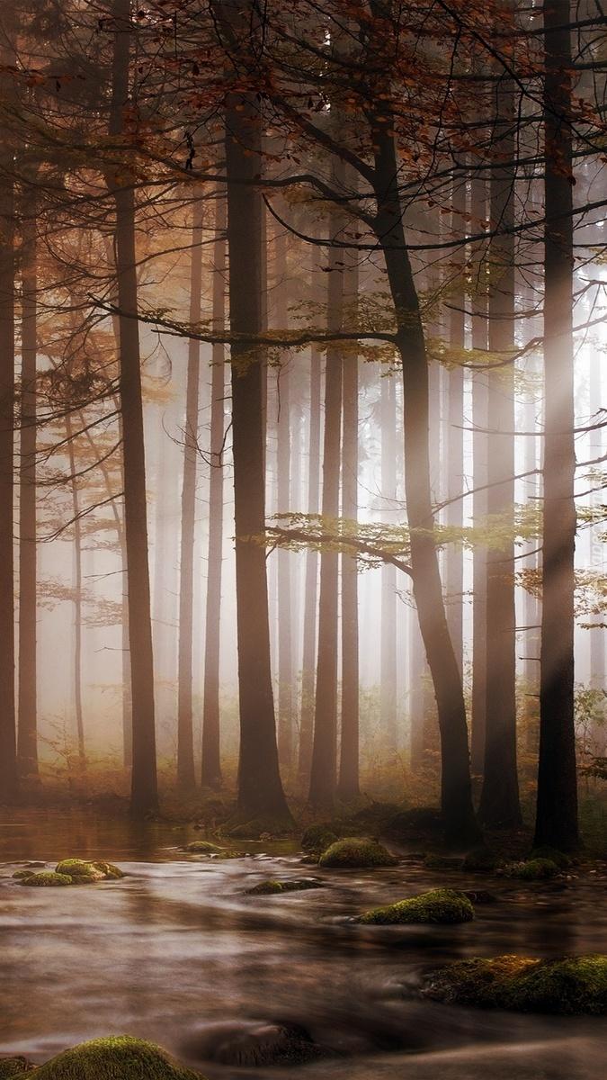 Rzeka w lesie o poranku