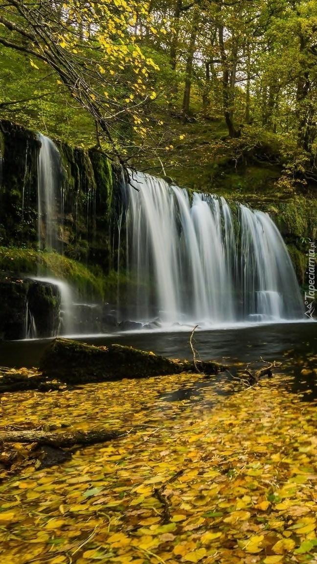 Rzeka w liściach z wodospadem