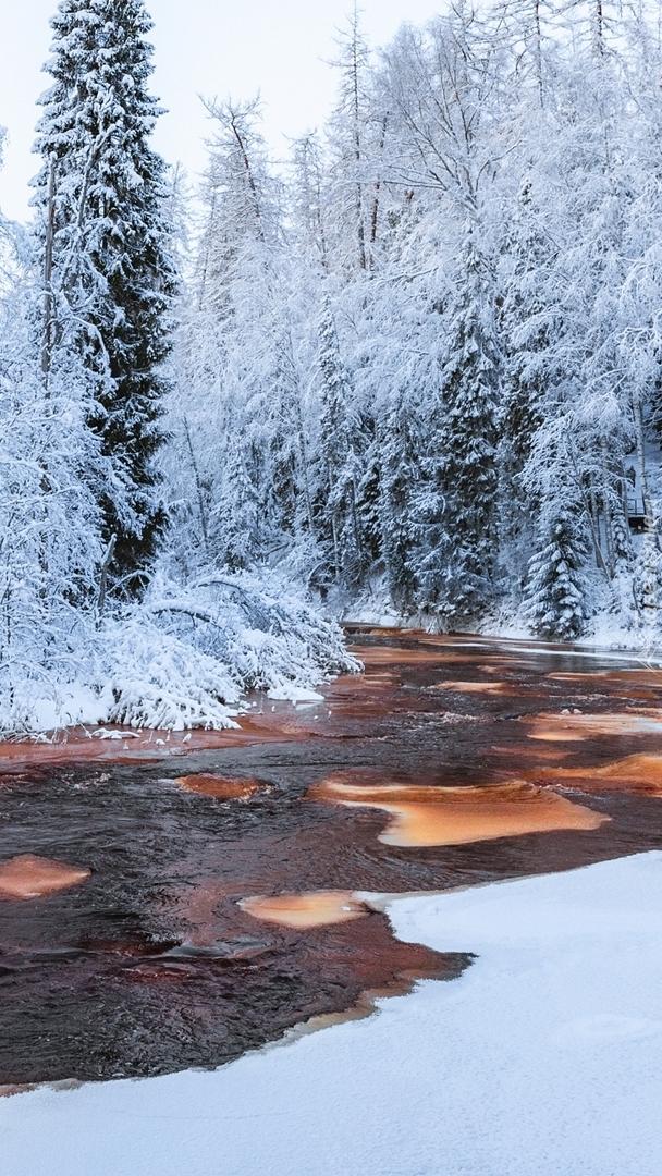 Rzeka w ośnieżonym lesie