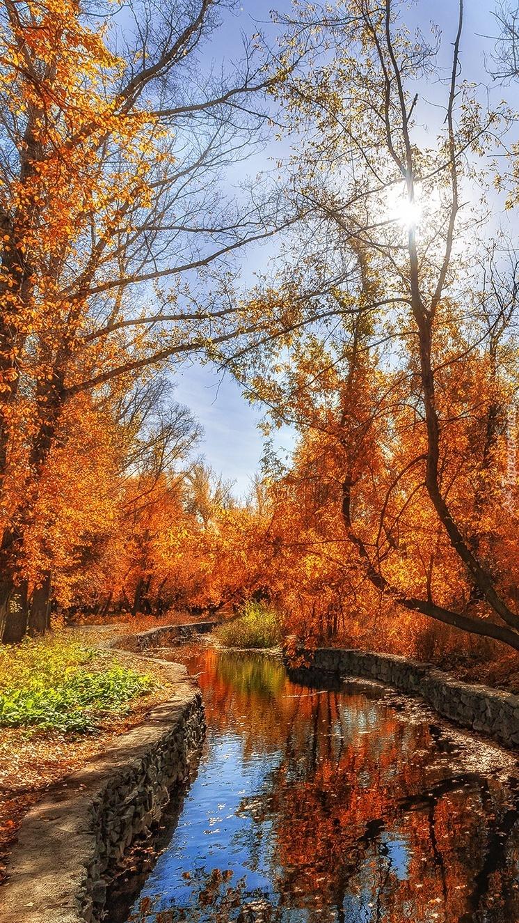 Rzeka w parku