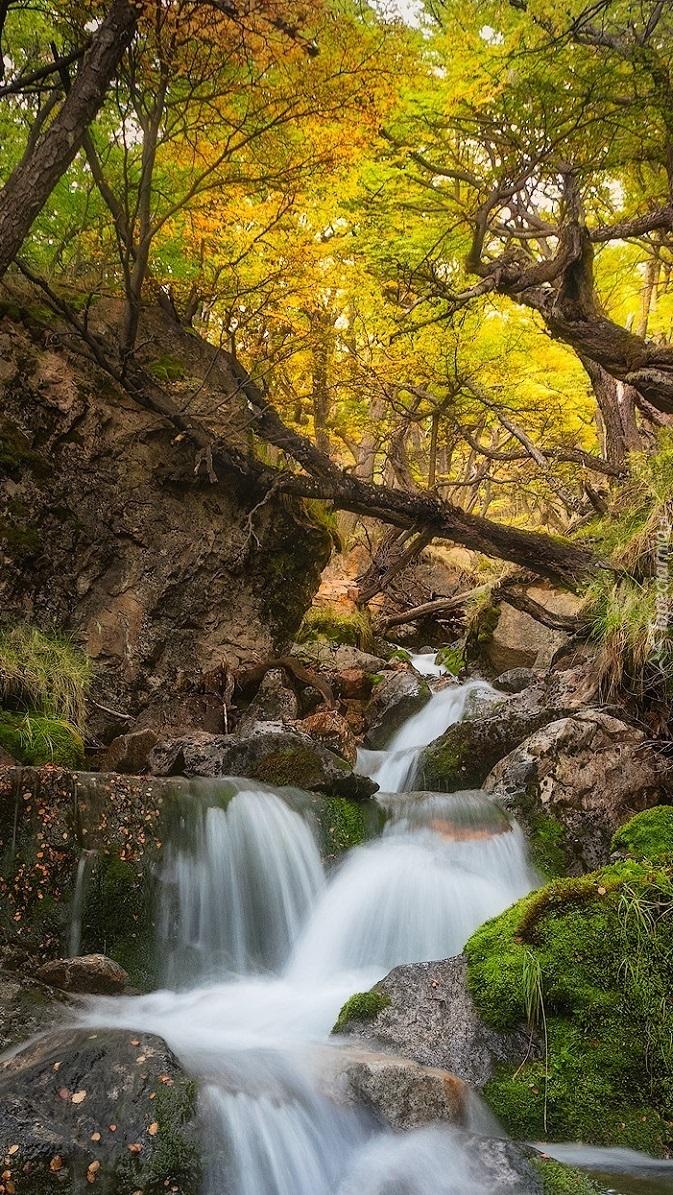Rzeka w Parku Narodowym Los Glaciares