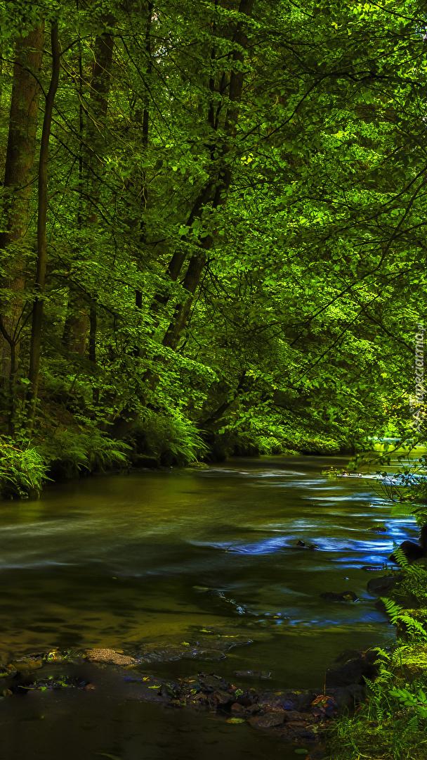 Rzeka w zielonym lesie