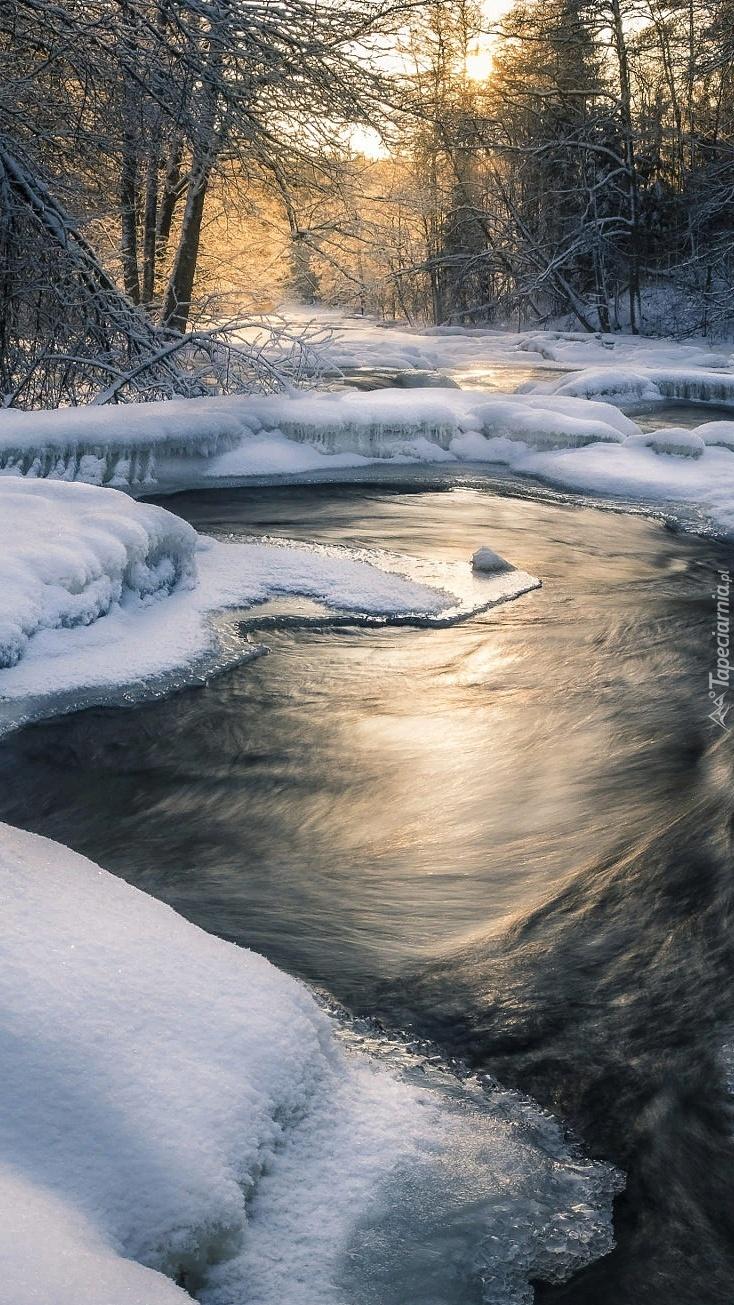 Rzeka w zimowym lesie
