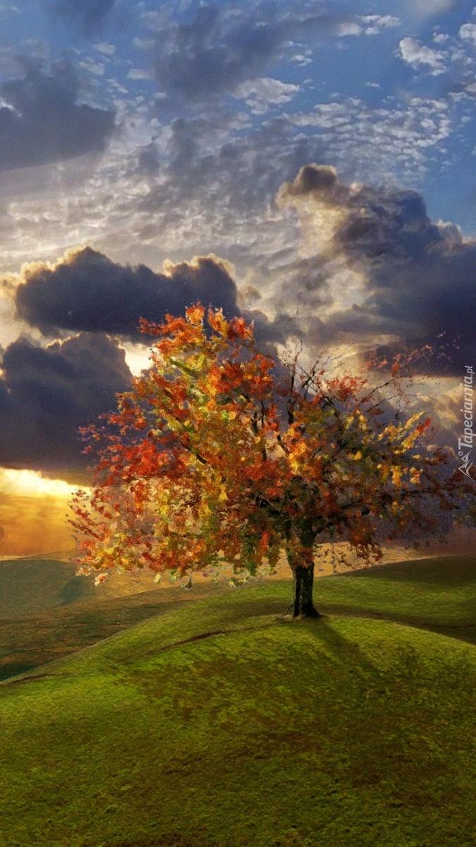 Samotne drzewo na górce
