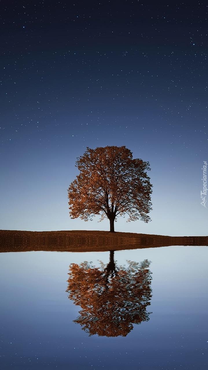 Samotne drzewo odbija się w wodzie