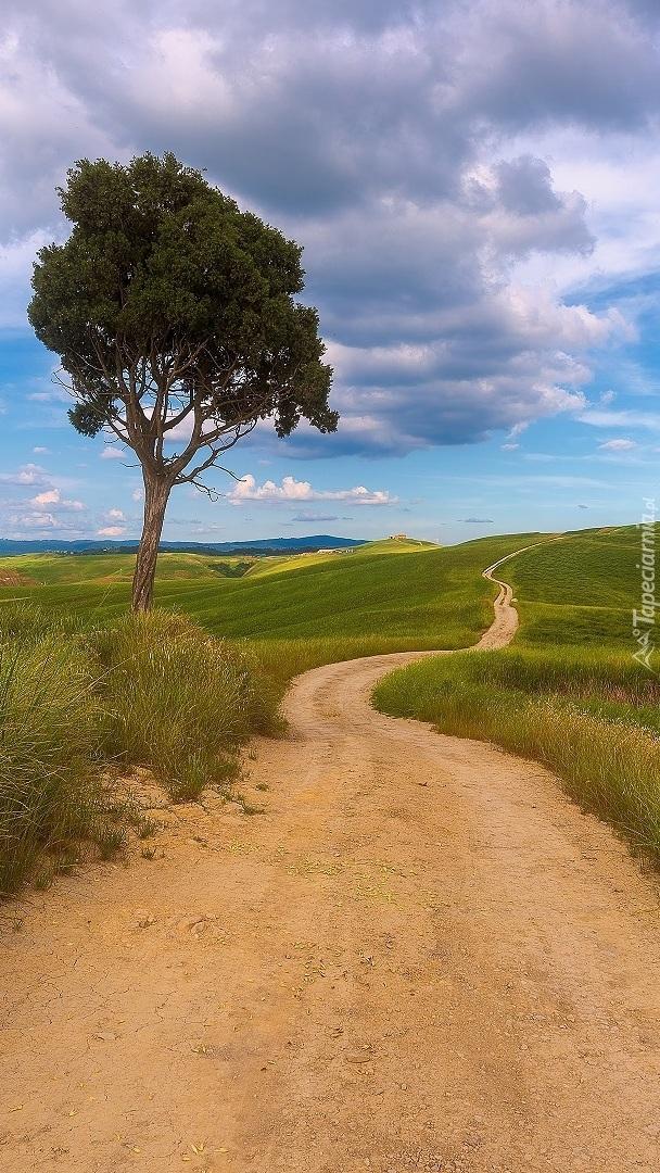 Samotne drzewo przy drodze pośród łąk
