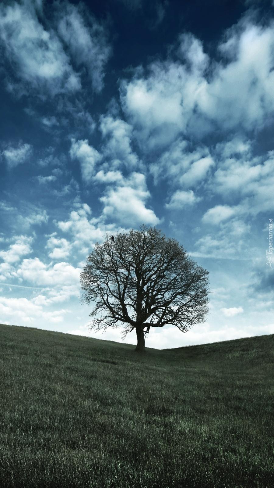 Samotne drzewo w polu