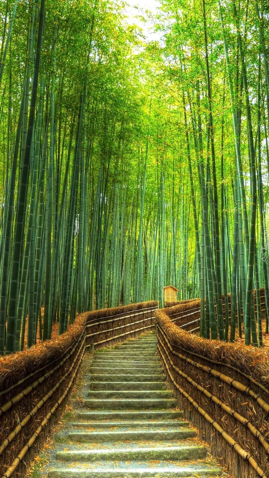 Schody pośród bambusowego lasu