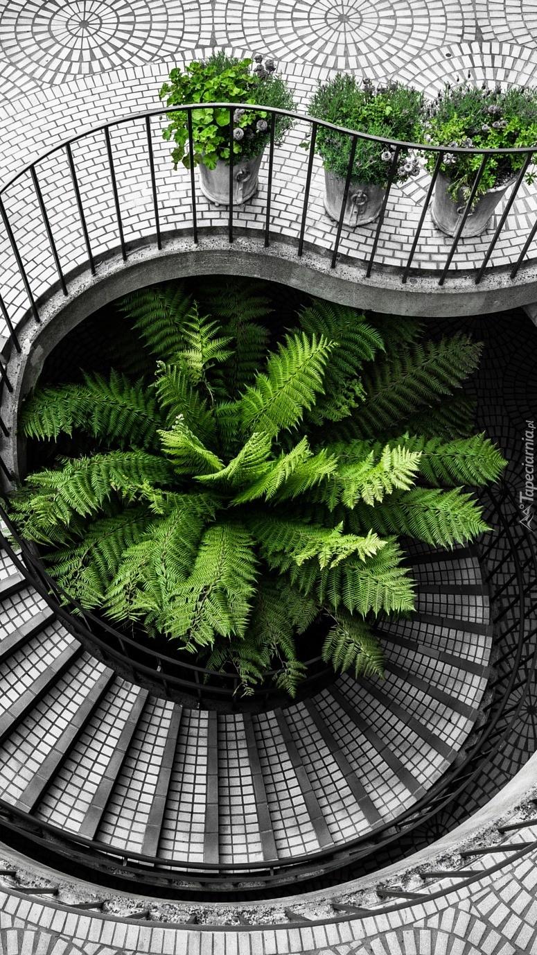 Schody w zieleni