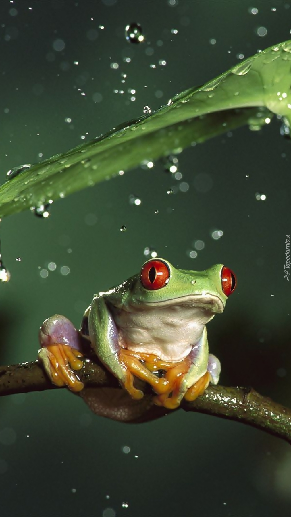 Schowałam się przed deszczem