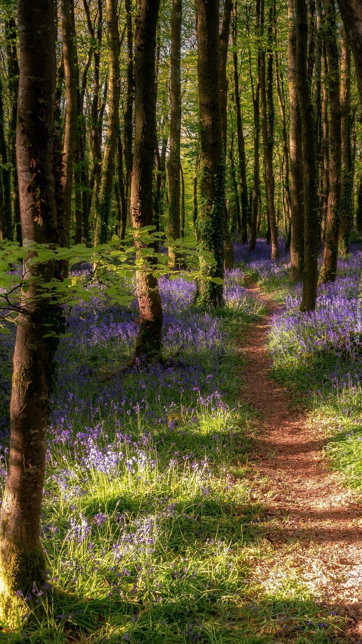 Ścieżka pośród wiosennego lasu