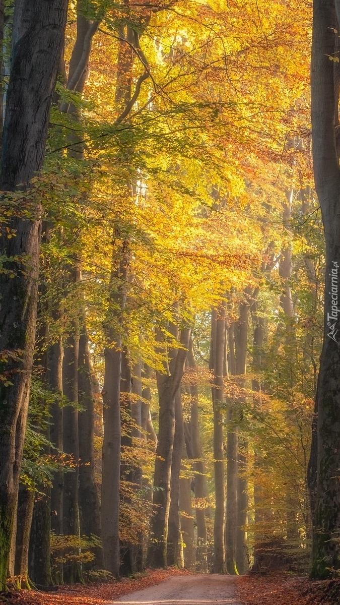 Ścieżka w jesiennym lesie