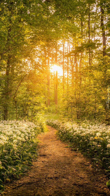 Ścieżka w słońcu