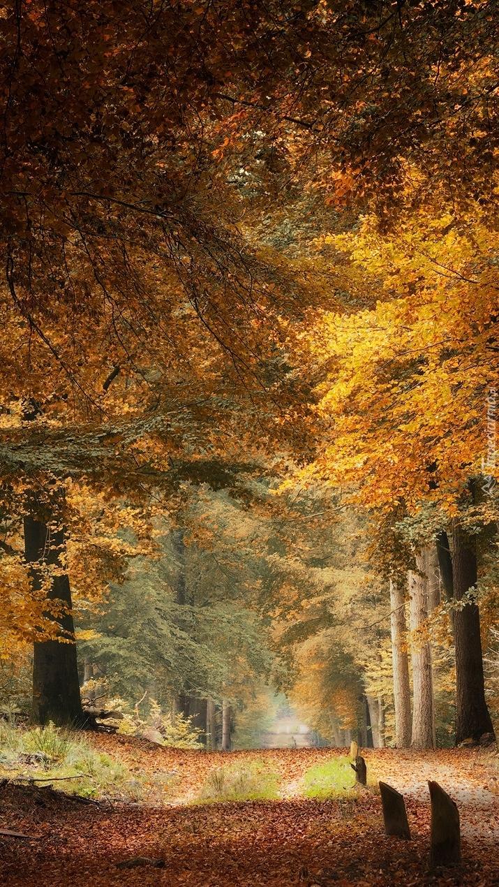 Ścieżka w słonecznym lesie