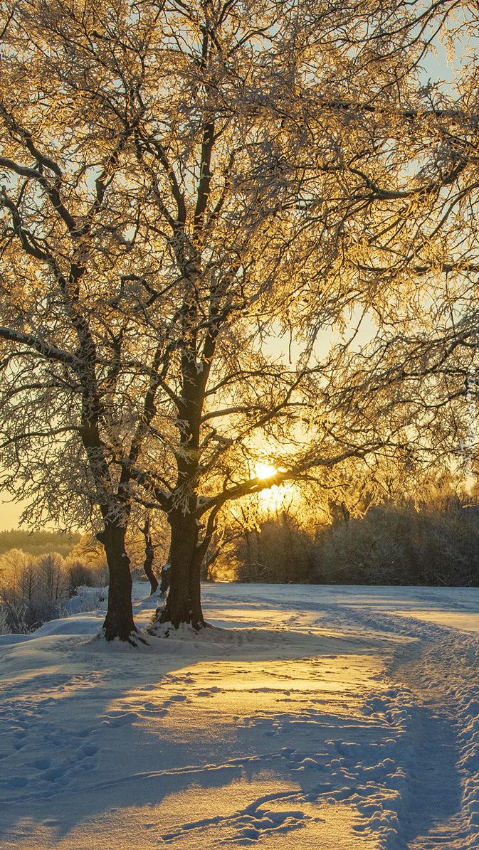 Ścieżka w śniegu pod drzewami