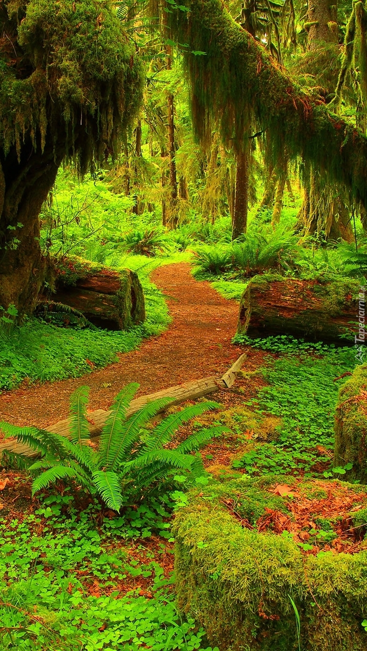Ścieżka w tropikalnym lesie