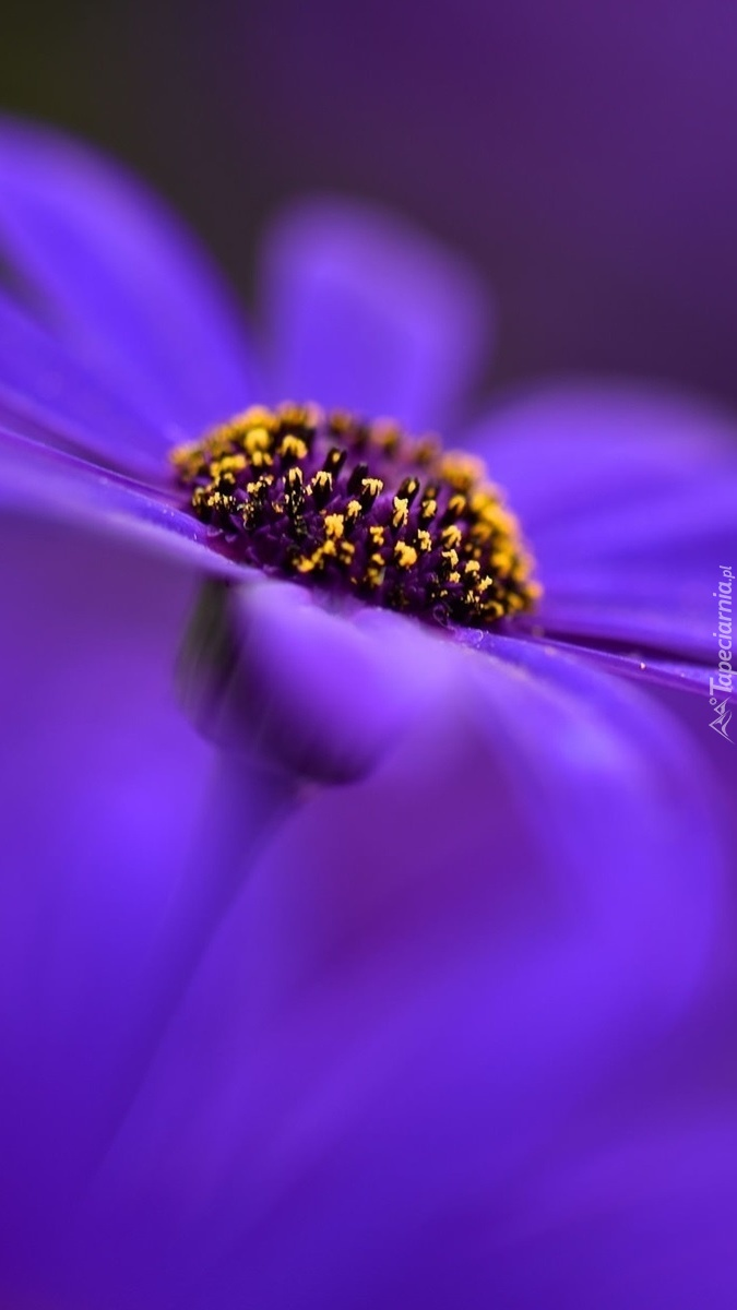 Serce kwiatka