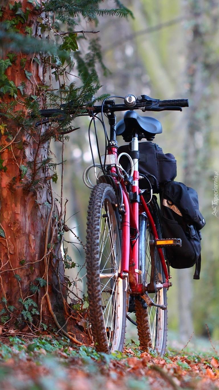 Sezon rowerowy wiosną czas zacząć