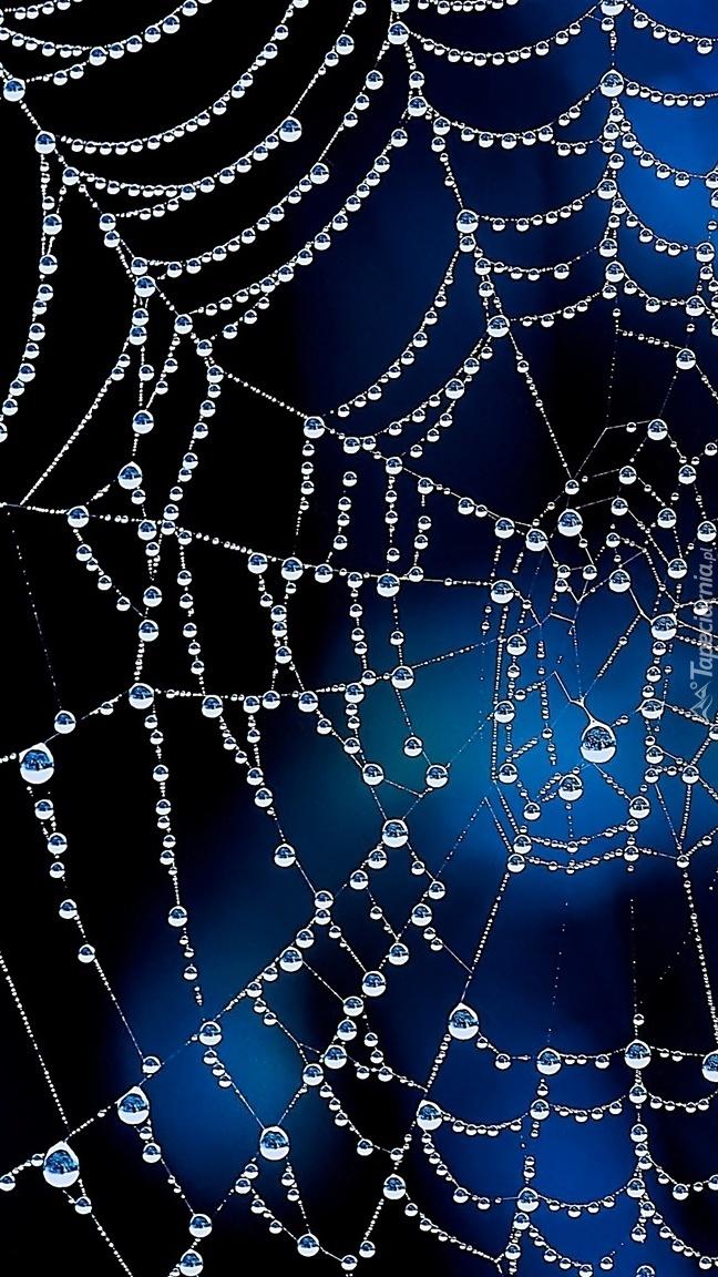 Sieć pajęcza z kroplami rosy