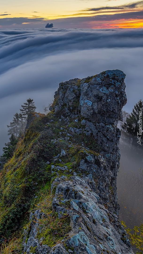 Skała i drzewa we mgle