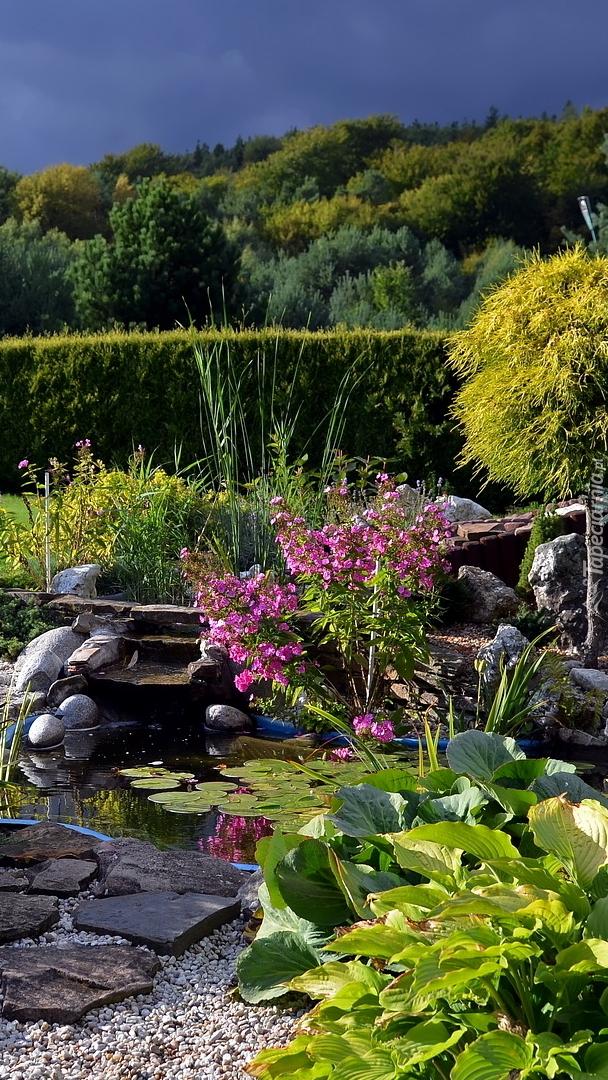 Skalniak z roślinami w ogrodzie