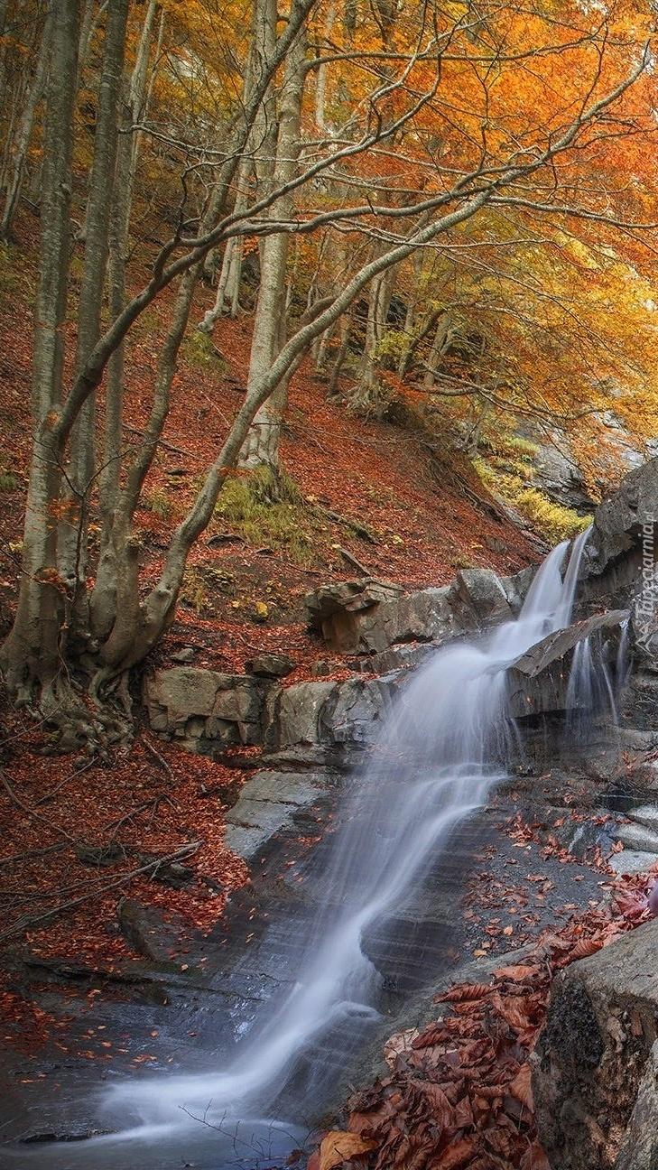 Skalny wodospad w jesiennym lesie