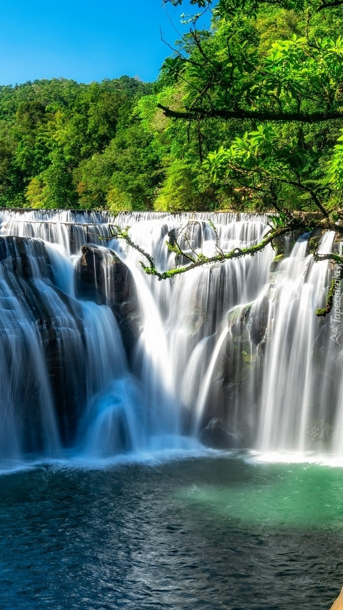 Skalny wodospad wśród drzew