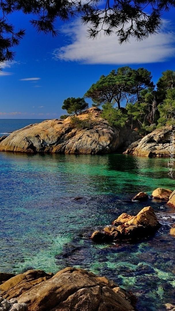 Skały i drzewa na brzegu morza
