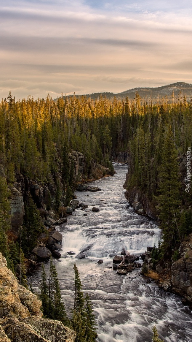 Skały i drzewa wzdłuż rzeki