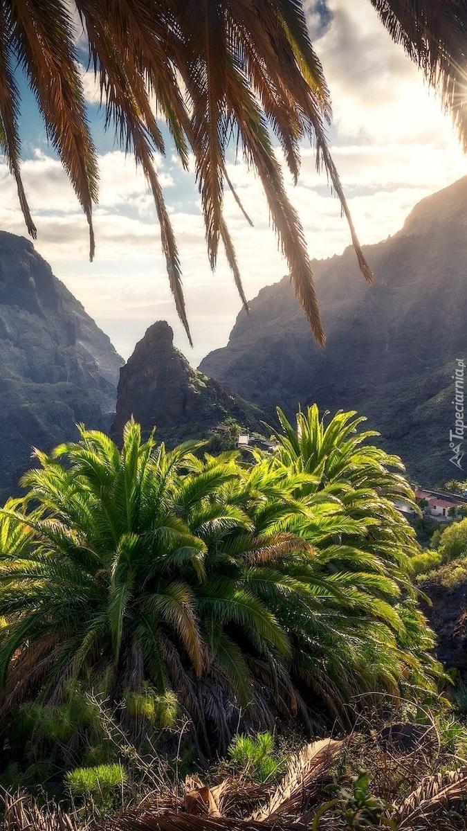 Skały i palmy na wyspie La Gomera