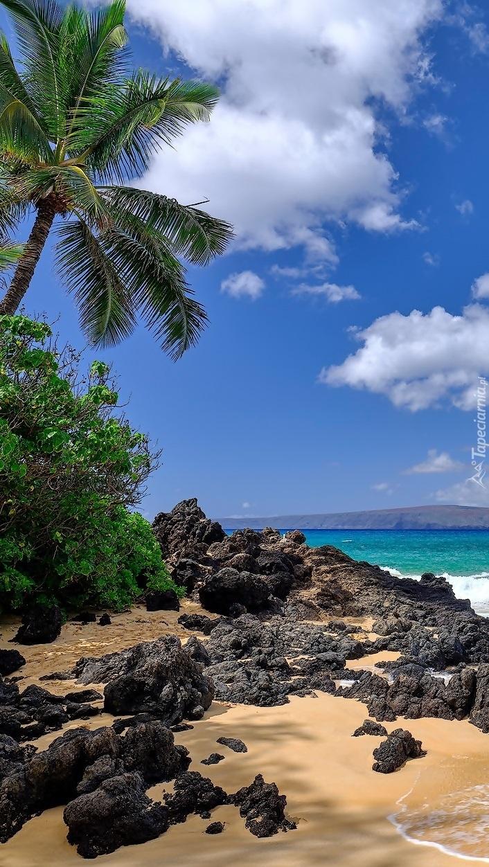 Skały i palmy nad brzegiem morza